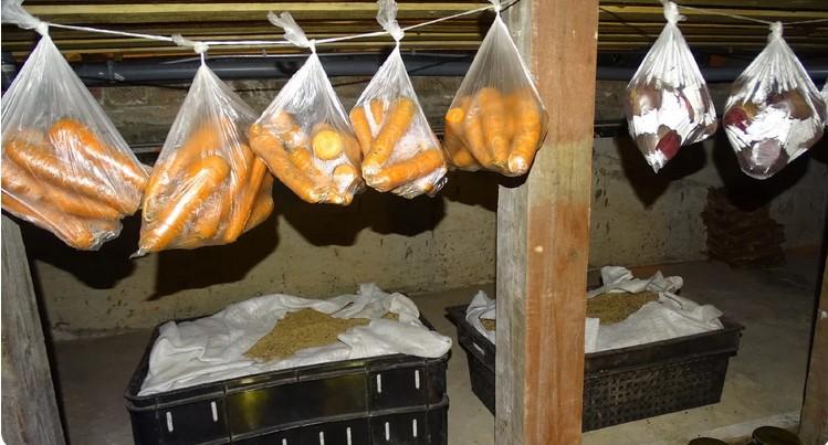Знайшли найкращий спосіб зберігання буряків і моркви на зиму